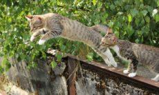 Kattenstoet Snapchat